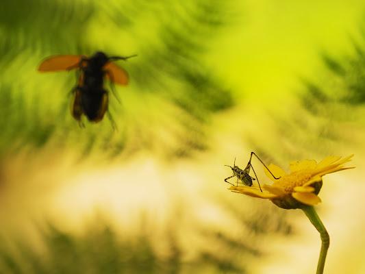 landing on the flower di fabio_sartori