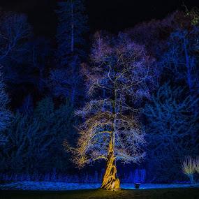 by Nigel Bishton - City,  Street & Park  Night