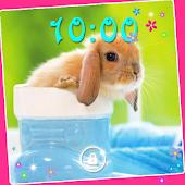 Rabbits Cool live wallpaper