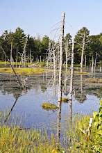 Photo: More images of the bog