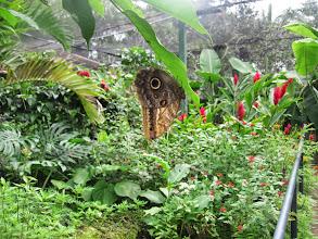 Photo: The Butterfly Farm.