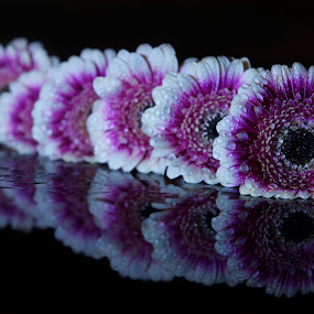 by Věra Dobrovolná - Flowers Flower Arangements