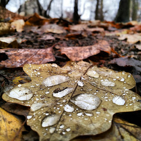 After the rain by Julija Moroza Broberg - Nature Up Close Leaves & Grasses ( water, fall leaves on ground, fall leaves, autumn, drops, brown, raindrops, forest, leaf, waterdrops, leaves, rain )