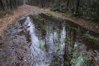 Photo: Pluie fine mais grosses gouttes sous les arbres