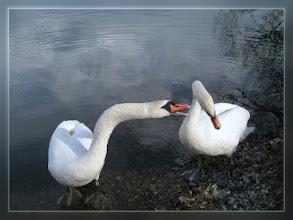 Photo: Liebeserklärung  A Declaration of Love ♥  Horch meine Liebe, ich Liebe dich doch ...!