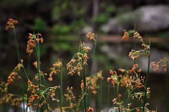 Photo: #flowerphotography  #grasspoker