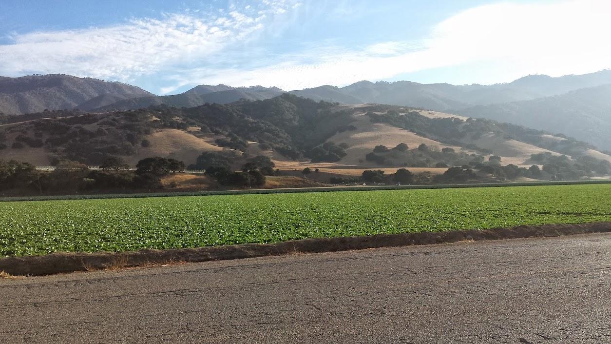 Fields south of Salinas