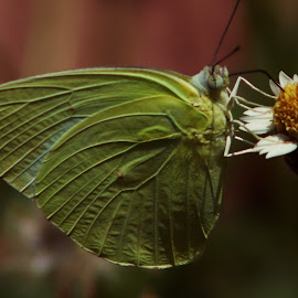 Cool Drink by Prakash Tantry - Animals Insects & Spiders ( colors, beautiful, natural, small, flower )