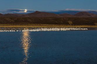 Photo: Full moon setting before sunrise.