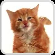 CAT LICKS LIVE WALLPAPER PRO