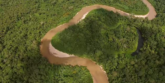 Desmatamento da Amazônia está ligado ao consumo de carne, diz Google