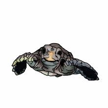 Photo: Meeresschildkröte