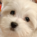 Baby Dogs Puzzle icon