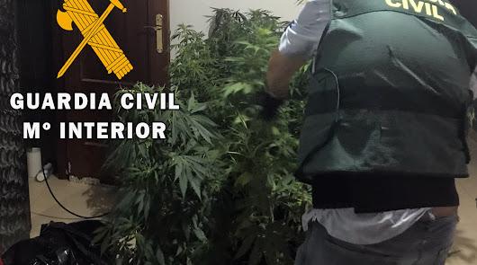 Marihuana encontrada en la vivienda.