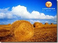 Rancho Longhorn