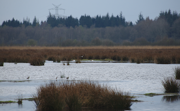 Photo: Another landscape shot of Wildes Moor near Osterrönfeld, Northern Germany.