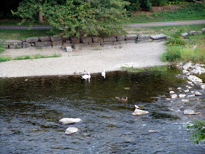 Photo: swans viewed from the patio