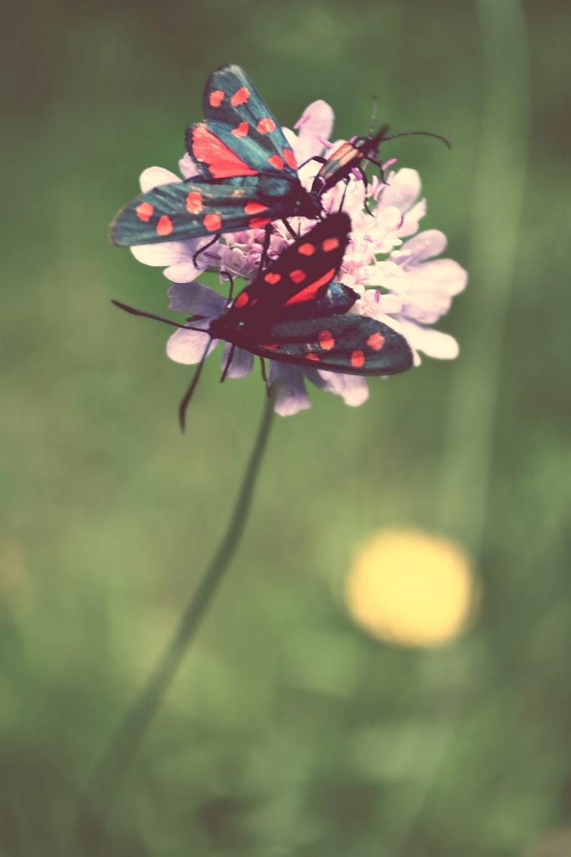 farfalle di sally.olivier
