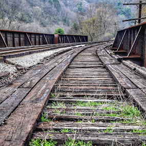 Abandon Rails  by Diane Ljungquist - Transportation Railway Tracks (  )
