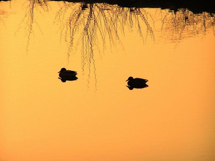 riflessi al tramonto di canebisca