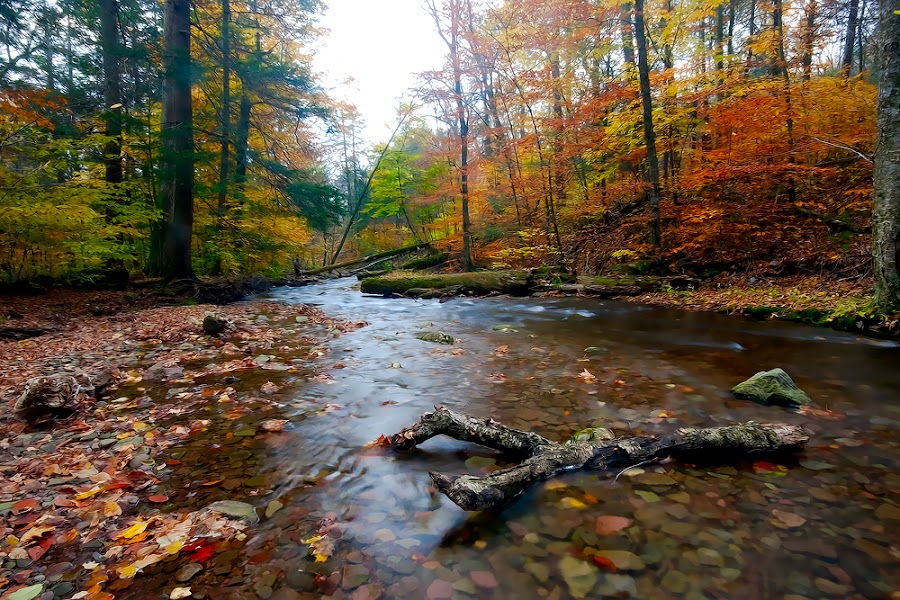 Stick in a creek by Buddy Eleazer - Landscapes Forests