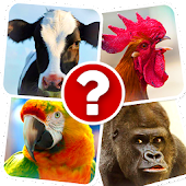 Memory Game: Animals