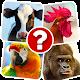 Memory Game: Animals (game)