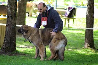 Photo: Habby des Songes du Clan des Loups