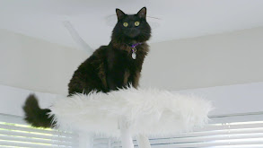 Tricked Out Cat Castle thumbnail