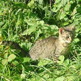 Kitten by Helena Moravusova - Animals - Cats Kittens ( kitten, animal )