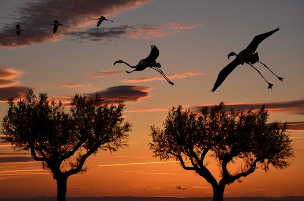 Fenicotteri al tramonto di BASTET-Clara