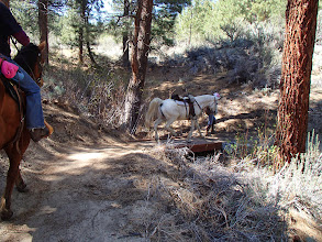 Photo: Clear Creek Trail-Safest to walk horses across bridges