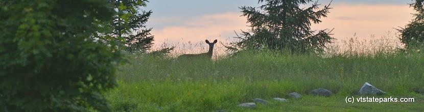 Photo: A deer at dusk at Alburg Dunes State Park by Raven Schwan-Noble