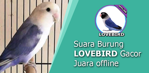 Suara Burung Lovebird Mp3 for PC