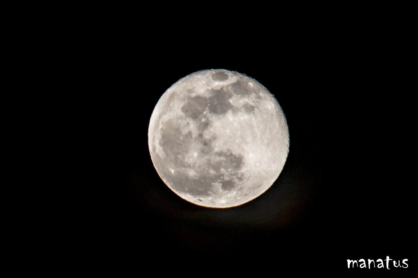 manatus luna llena