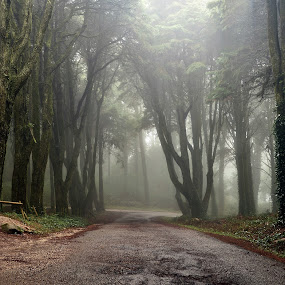 Peninha - Sintra by Paulo Jorge - Landscapes Forests