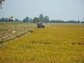Photo: Machineral rice harvesting