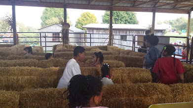 Photo: in the hay maze