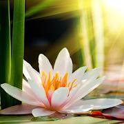 Lotus flower wallpaper hd apps on google play lotus flower wallpaper hd mightylinksfo