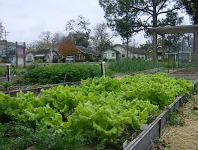 Photo: Lovely Lettuce 12/20/10
