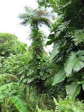Photo: It was onderweg een van de grootste boomvarens en dan ook nog een keer helemaal begroeid door die epifytische gastplanten. Hoogte schat ik op zeker 10 meter