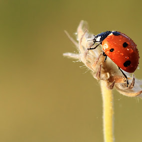 by Necdet Yaşar - Animals Insects & Spiders
