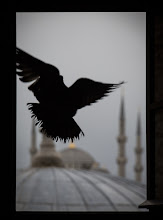 Photo: Was talking about natural frames as a compositional technique with my students this week, had this as a sample.  Also for #flybyfriday and #framedsubjectfriday  #turkeytravel  #turkey  #travel  #travelphotography  #travelphotos  #istanbul  #hagiasophia  #birds