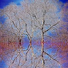 Didgref 144 by Michael Moore - Digital Art Things