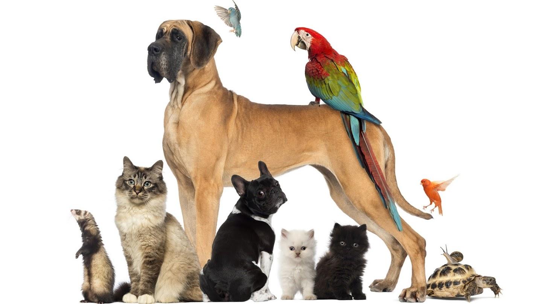 Watch Pets.TV live