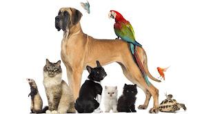 Pets.TV Goes to Panama thumbnail
