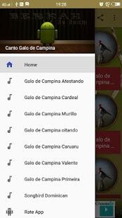 Canto Galo de Campina - náhled