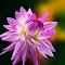 IMG_3870-pix.jpg