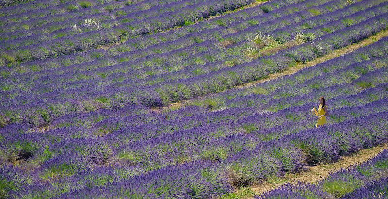 Viola lavanda di sarre 49