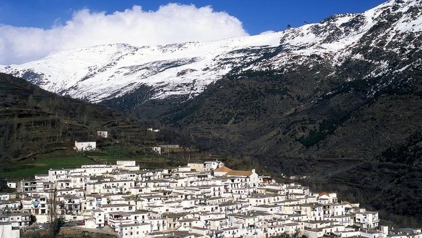 Los pinares de zonas como Las tres Villas y Nacimiento, en Sierra Nevada, presentan síntomas de decaimiento.